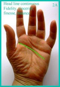 2A palm head line continuous